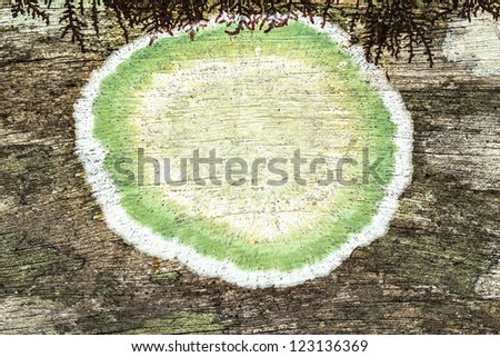close up of an old rough wood background texture with green mildew - stock photo
