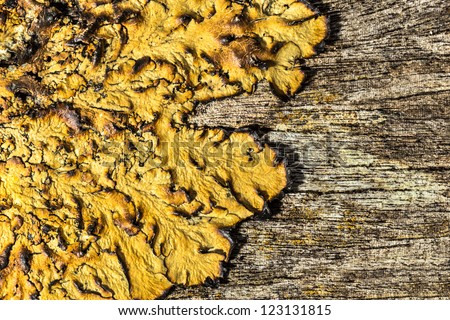 close up of an old rough wood background texture with lichen - stock photo