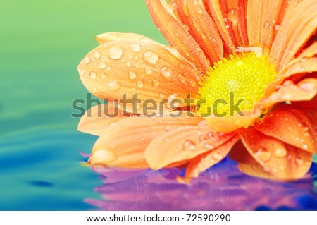 Close-up of an orange flower reflected in rendered water - stock photo