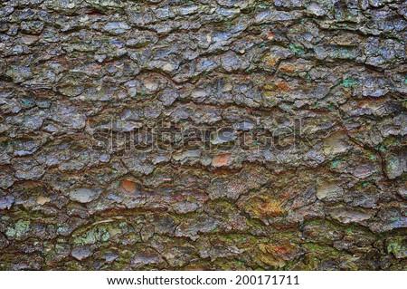 close-up of an pine tree's bark - stock photo
