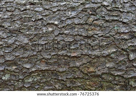 close-up of an pine tree's bark