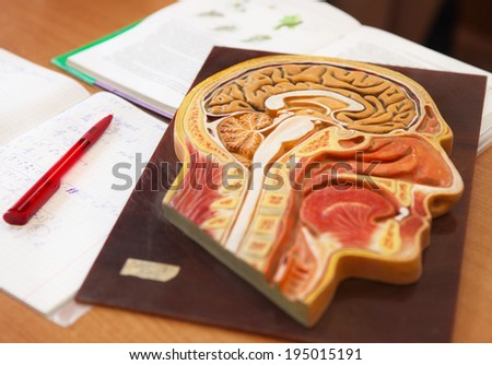 Close up of anatomical  model of a human head with book, writing-book and pen on the desk in biology classroom - stock photo