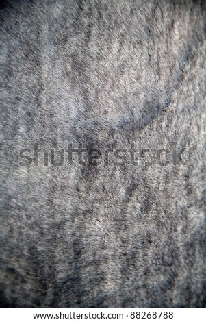 Close up of animal fur. - stock photo