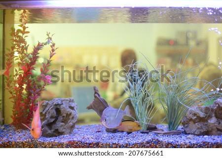 close up of aquarium tank full of fish - stock photo