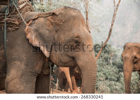 Close up of asian elephants - stock photo
