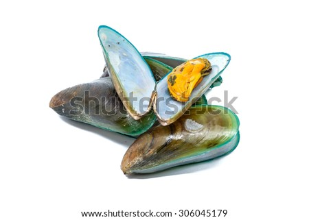 Close up of Asian green mussel isolated on White background - stock photo