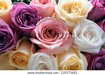 Close up of assorted color roses