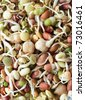 Close up of assorted organic adzuki, chickpea and mung beansprouts, filling whole frame. - stock photo