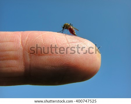 close-up of attacking mosquito on the human finger - stock photo