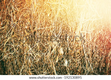 Close up of Autumn Haystack in sun rays