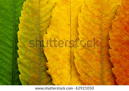 close up of autumn leaves - stock photo