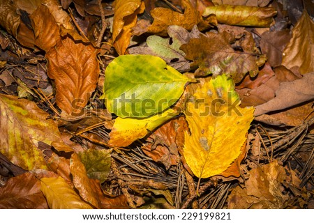 close up of autumn leaves on the forest soil - stock photo
