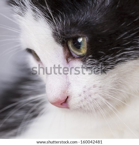 Close-up of baby cat eyes domestic animal