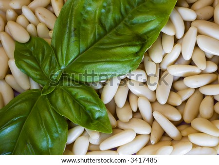 Close up of Basil on Pine Nuts - stock photo