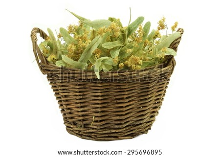 Close-up Of Basket With  Eastern Europe Linden Tree Leafs, Blossom And Fruits Isolated On White Background. Ingredient For Traditional Caffeine-free Green Tee Named As Tilleul - stock photo