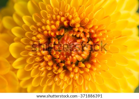 close up of beautiful flower and petals