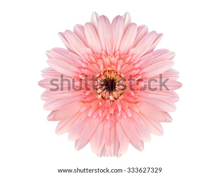 close up of beautiful gerbera flower on white background