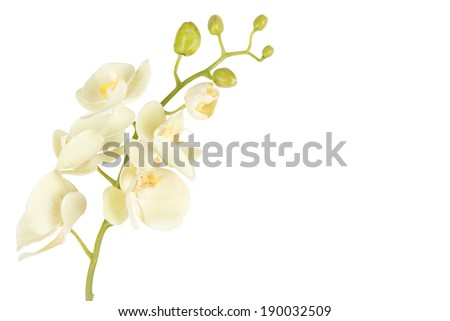 close up of beautiful orchid flower isolated on white background - stock photo