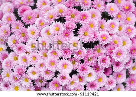 Close up of beautiful pink flower background - stock photo