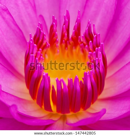 Close up of beautiful purple water lily - stock photo