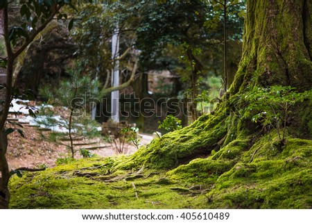 Close up of beautiful rtree with moss cover on moutain in kaga city japan. - stock photo