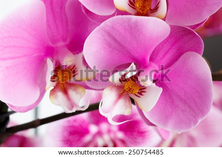 Close-up of beautiful vibrant pink orchid - stock photo