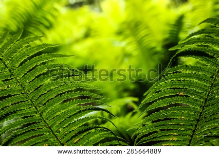 Close-up of beauty green leaves of fern - stock photo