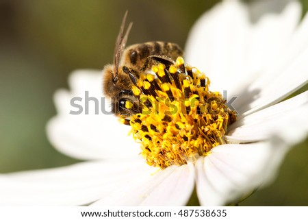 Close-up of bee on white flower.