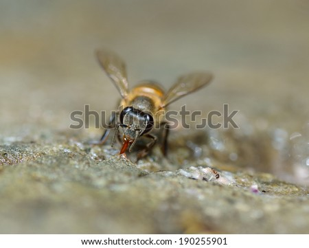 Close up of bees - stock photo