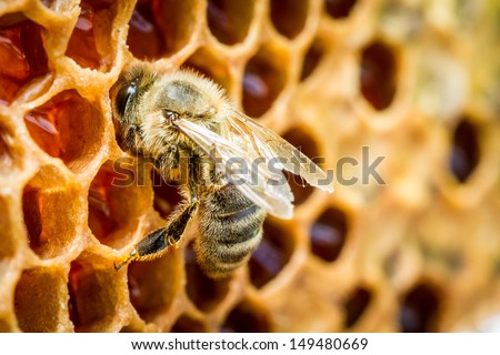 Close up of bees in a beehive on honeycomb - stock photo