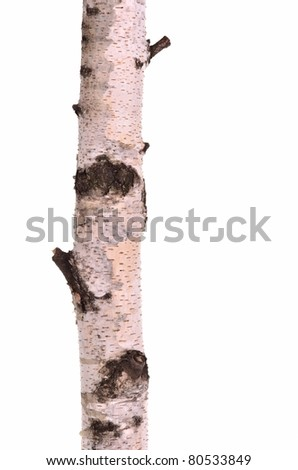 Close-up of birchwood stub log with wooden texture, isolated on white background - stock photo