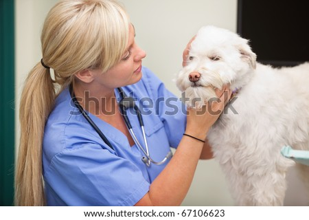 Close-up of blond female veterinarian examining dog - stock photo