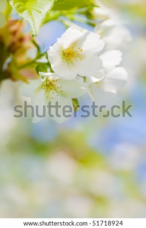 Close up of blooming flowers with space for text uder it - stock photo