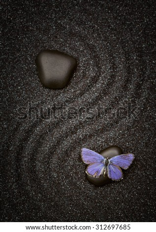 Close up of blue butterfly on a zen black stone  - stock photo