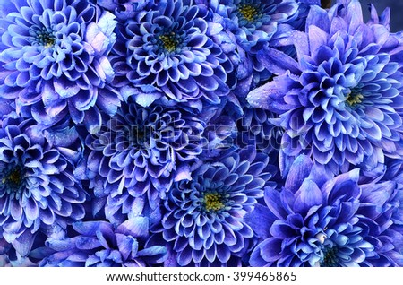 Close up of blue flower (aster) with water droplets - stock photo