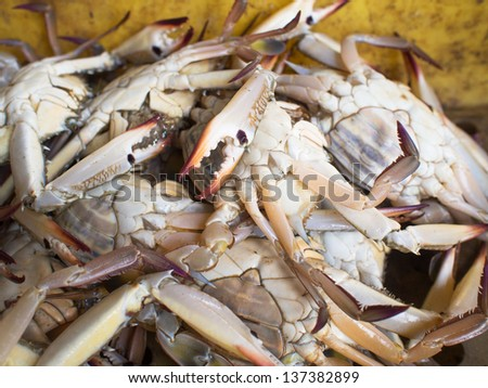 Close up of blue flower crab in a fish market in Thailand - stock photo
