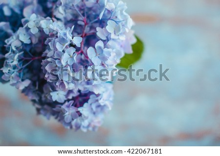 Close up of blue flower of hydrangea - stock photo