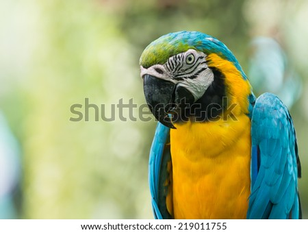 close up of blue macaw parrot  - stock photo