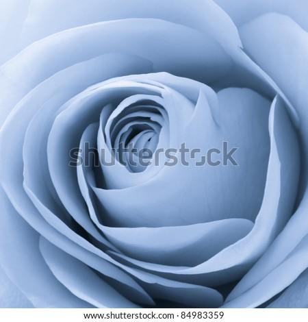 close up of blue rose petals - stock photo