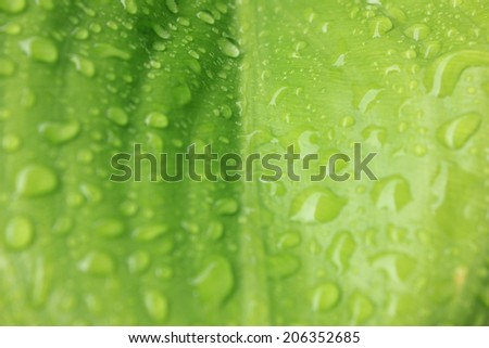 Close up of blurred green leaf background