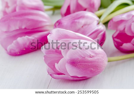 Close up of bouquet of pink tulips laying on white wooden table - stock photo