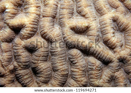 Close up of brain coral
