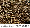 Close up of Brown and Black camouflage background texture of Indian Peacock bird's feathers - stock photo