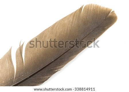 Close-up of brown feather isolated on white backgroind