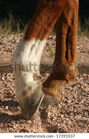 Close up of brown horse and leather stirrup - stock photo