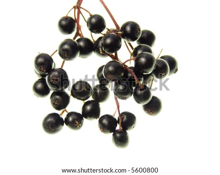 Close-up of bunch of black elderberry on white background