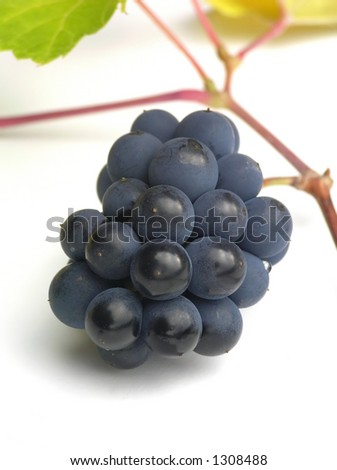 Close-up of bunch of black grapes  on white table - stock photo