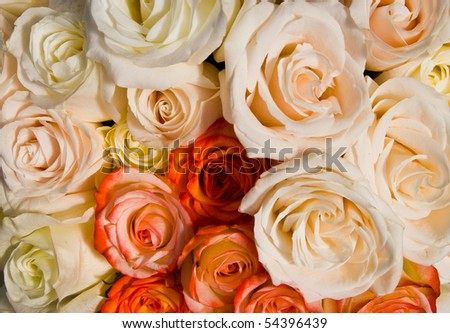Close-up of bunch of colourful roses - stock photo