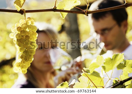 Close-up of bunch of green grapes hanging from vine in vineyard with blurred male and female winemaker in background holding glasses for wine tasting. - stock photo