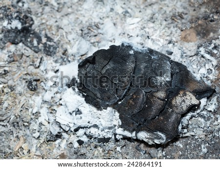 Close up of burnt wood  with ashes background - stock photo